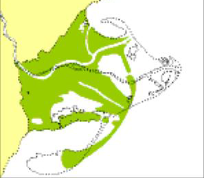 Representació del Delta de l'Ebre al S.XVI